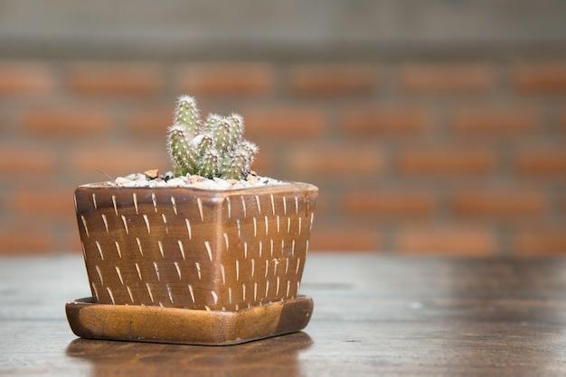 Netter kaktustopf. kleiner kaktus auf holztisch im haus.