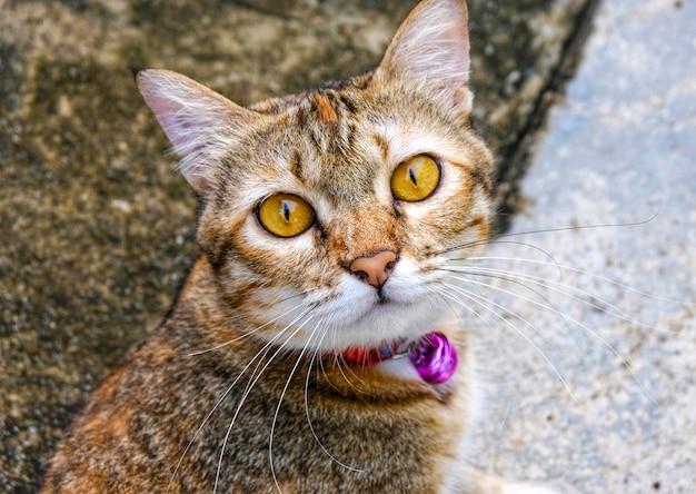 Netter katzenblick oder sehen auf kamera während machen ein foto.