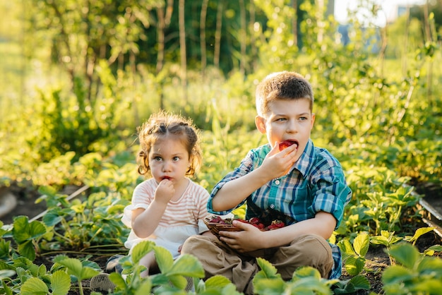 Netter kleiner bruder und schwester, die erdbeeren essen