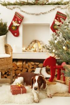Netter kleiner hund auf einem weihnachtlich geschmückten wohnzimmer