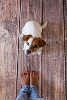 Netter kleiner hund, der auf dem holzboden liegt. neben den beinen seines besitzers. von oben betrachten. tageszeit, lebensstil