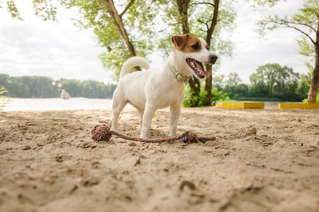 Netter kleiner hund, der auf dem seeufer steht