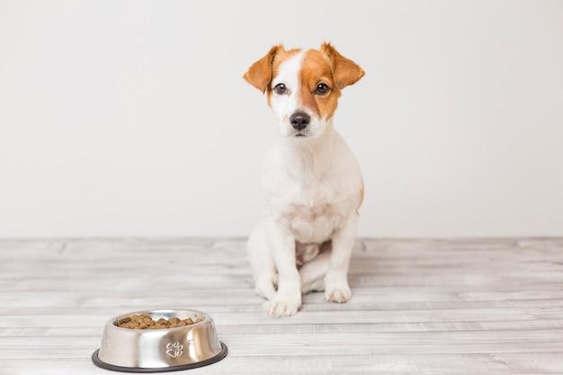Netter kleiner hund, der sitzt und wartet, um seine schüssel hundefutter zu essen