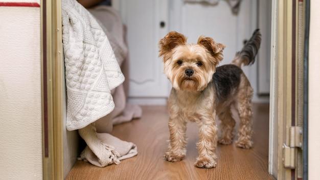 Netter kleiner hund im wohnwagen
