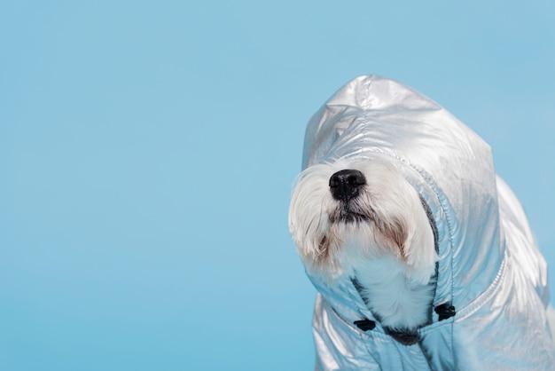 Netter kleiner hund mit kostüm