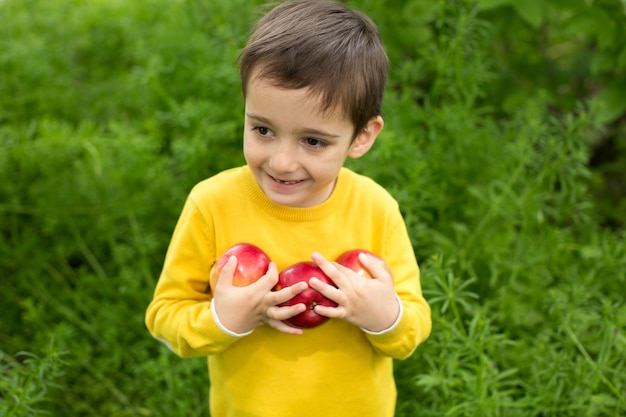 Netter kleiner junge, der äpfel in einem grünen grashintergrund am sonnigen tag auswählt. gesunde ernährung.
