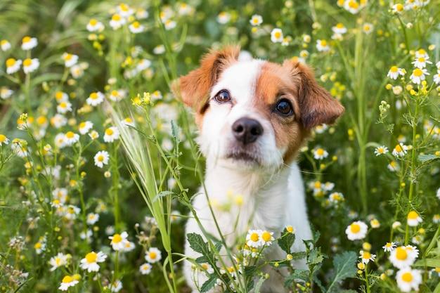 Netter kleiner junger hund unter den blumen und im grünen gras. frühling. liebe für tiere konzept. haustiere.