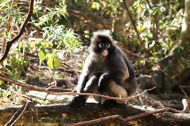 Netter kleiner makaken, der auf einem holzblock sitzt