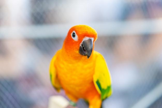 Netter kleiner orange papagei auf einem baumast