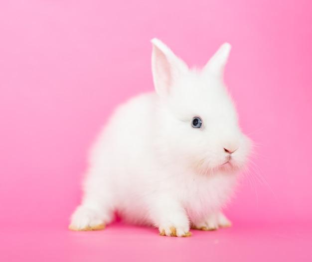 Netter kleiner pelziger kaninchenhase