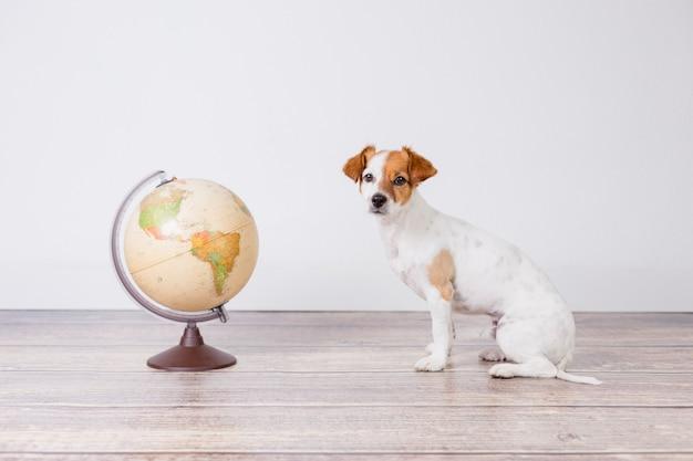 Netter kleiner schöner hund, der außerdem auf dem boden, weiße wand mit weltkugel sitzt. reise- und bildungskonzept. lebensstil