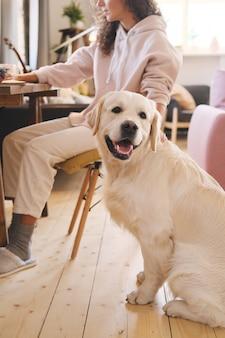 Netter labrador, der auf dem boden zu hause mit seinem besitzer sitzt, der am tisch im hintergrund arbeitet