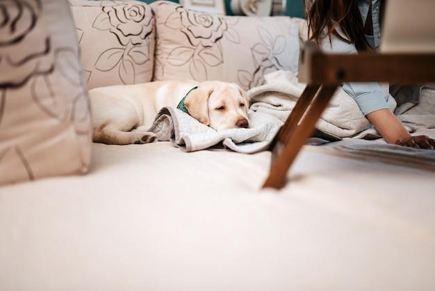 Netter labrador-welpe ist schläfrig.