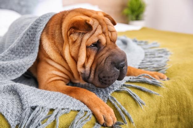 Netter lustiger hund auf bett zu hause