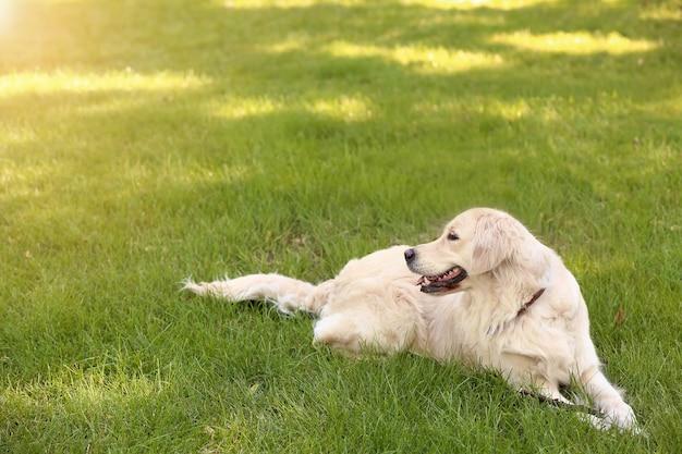 Netter lustiger hund auf grünem rasen im park