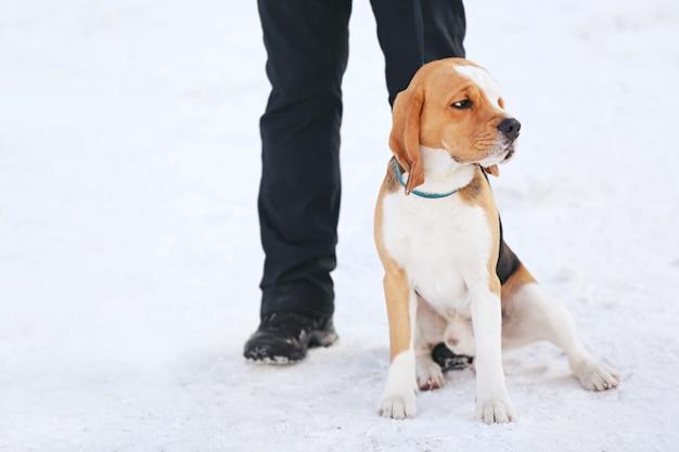 Netter lustiger hund mit besitzer draußen am wintertag
