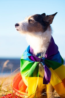 Netter lustiger hund mit bunter regenbogenschwule lgbt flagge. stolz urlaubskonzept. outdoor-lifestyle. vertikale fotografie.