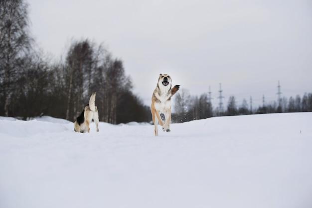 Netter mischlingshund im verschneiten winterhund, der im schnee läuft und spaß hat