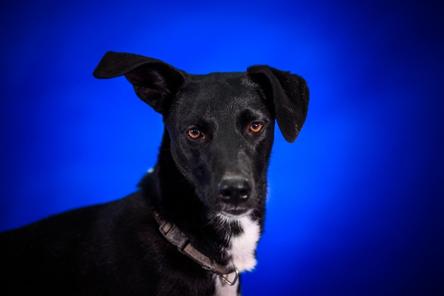 Netter mischlingshund. porträt.