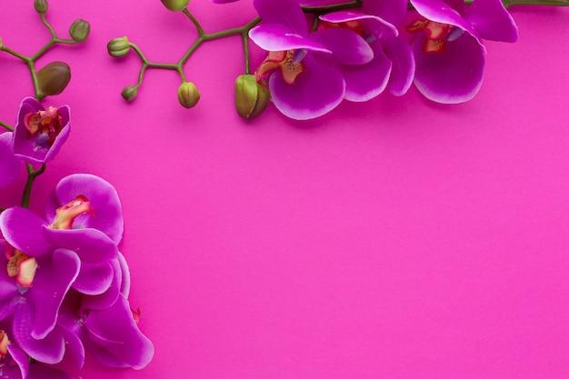 Netter rahmen mit kopienraum-rosahintergrund