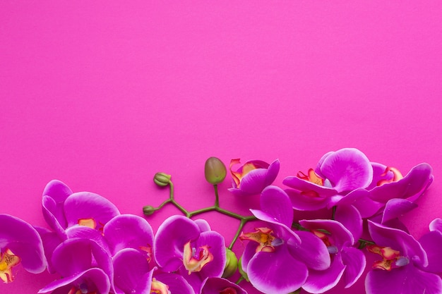 Netter rahmen mit starkem rosa hintergrund