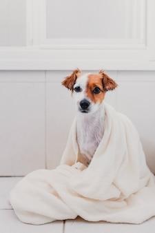 Netter reizender kleiner hund nass in der badewanne. inhaber der jungen frau, der ihren hund zu hause getrocknet erhält