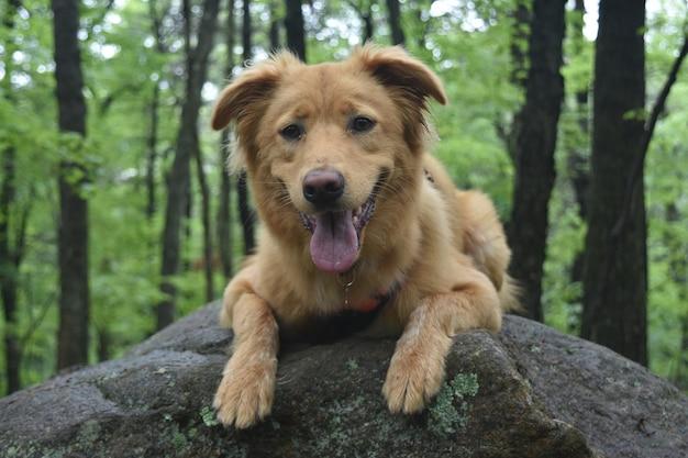 Netter schottischer hund, der auf einem großen felsen lächelt