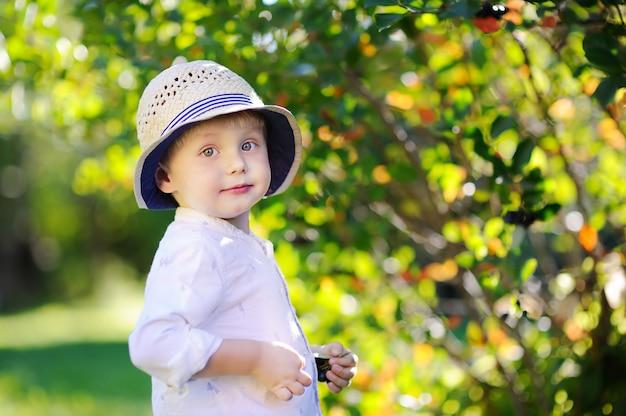 Netter stilvoller kleinkindjunge, der schwarze johannisbeeren im inländischen garten auswählt