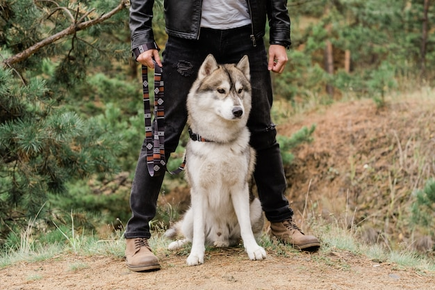Netter und kluger reinrassiger husky-hund, der auf fußweg durch beine seines besitzers sitzt, während er im wald chillt