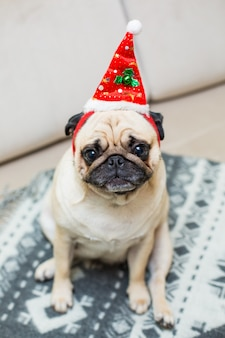 Netter weihnachtsmops hündchen tragen rote weihnachtsmütze
