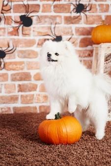 Netter welpe, der auf halloween-kürbis steht