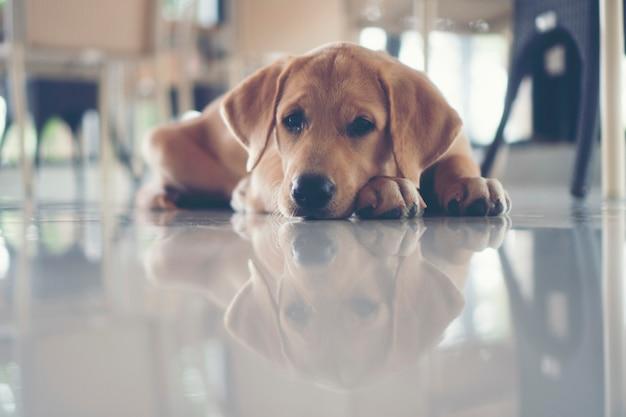 Netter welpen hund sind schläfrig.