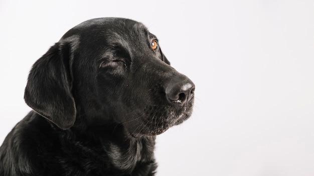 Nettes blinzeln des hundes