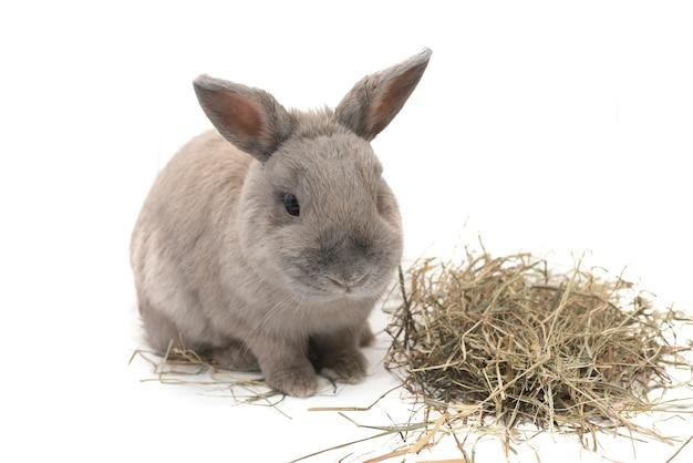 Nettes dekoratives kaninchen mit heu isoliert auf weißem hintergrund