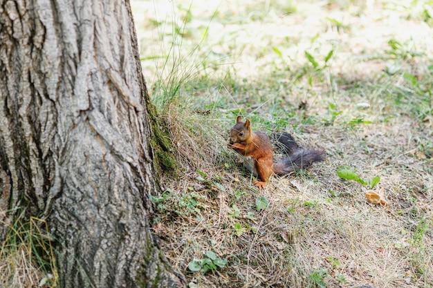 Nettes eichhörnchen auf baum, das sommerszene betrachtet