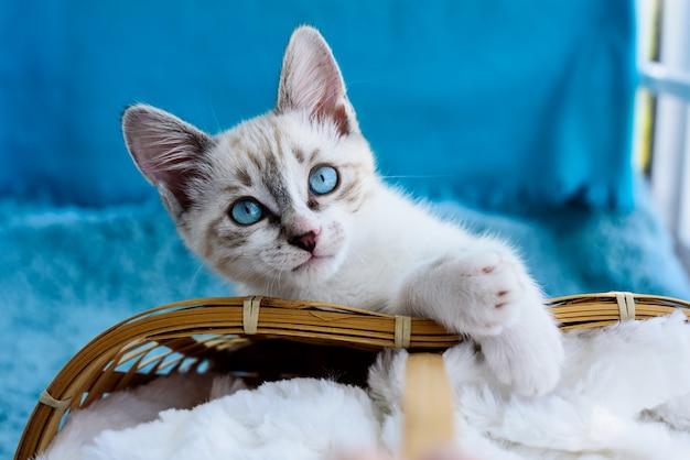Nettes entzückendes getigertes kätzchen mit blauen augen nahe kugeln und korb auf der blauen oberfläche