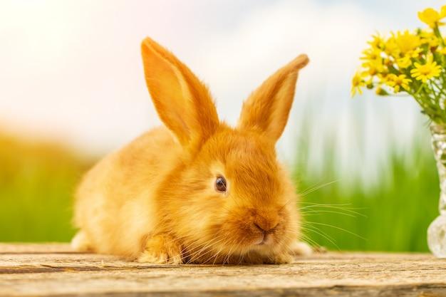 Nettes flaumiges rotes kaninchen auf naturhintergrundblumenstrauß von gelben blumen