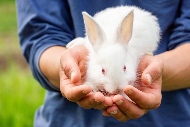 Nettes flaumiges weißes kaninchen in der hand
