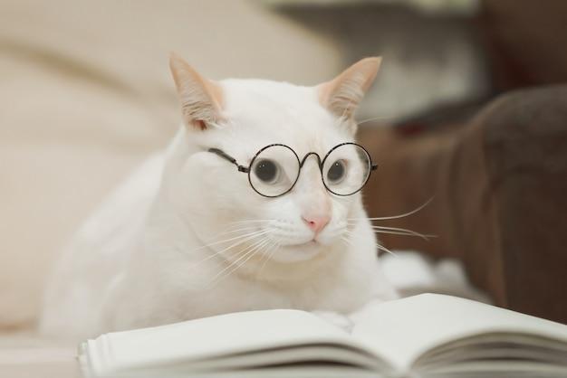 Nettes geschäftskatze tragendes glaslesebuch. weiße katze, die auf sofa liegt.