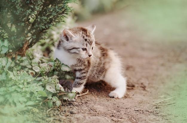 Nettes gestreiftes kätzchen, das in grüne wiese geht. kitty spielt im garten