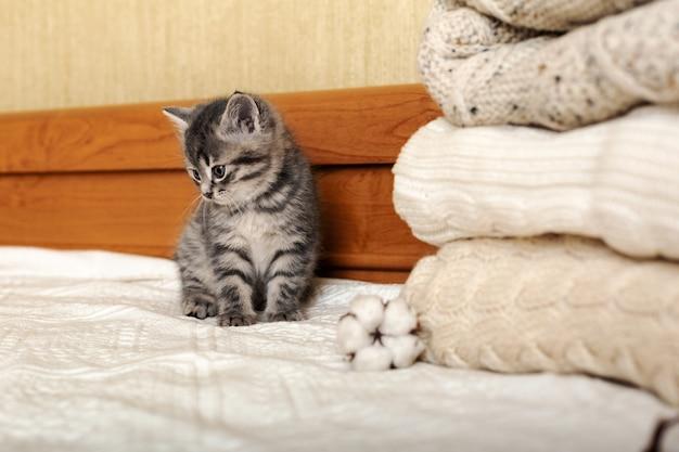 Nettes getigertes kätzchen, das nahe bündel von gestrickten warmen pullovern sitzt, die im stapel gefaltet werden. neugeborenes kätzchen babykatze am gemütlichen haus.