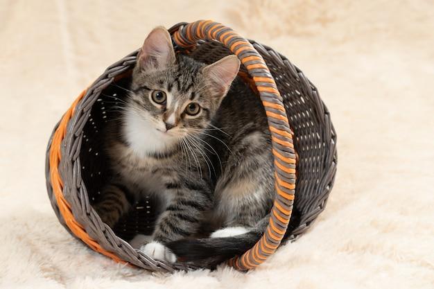 Nettes graues getigertes kätzchen sitzt in einem weidenkorb auf einem hintergrund einer cremefarbenen pelzdecke