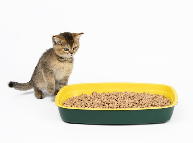 Nettes graues kätzchen scottish straight sitzt in der nähe einer plastiktoilette mit sägemehl auf einer weißen oberfläche