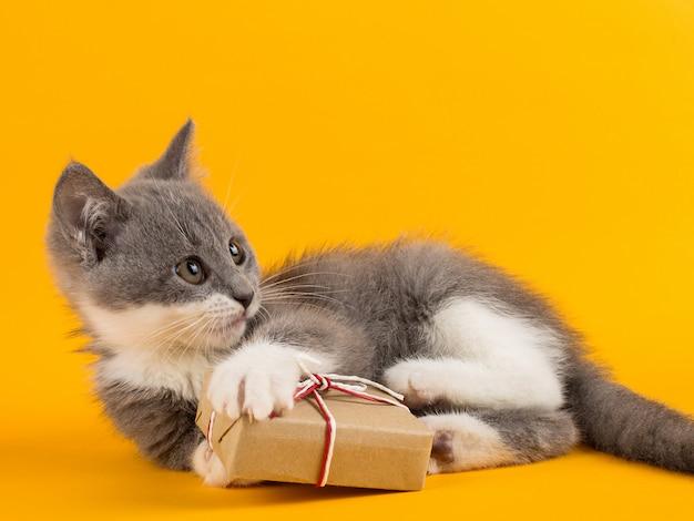Nettes graues kätzchenspielen lustig und spaß mit einer weihnachtsgeschenkbox auf einem gelb.