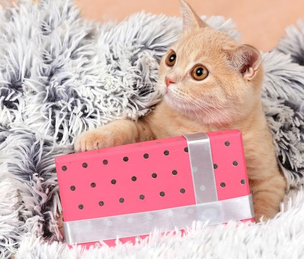 Nettes kätzchen, das auf der geschenkbox auf flauschiger decke liegt. kätzchen mit warmem wollplaid bedeckt