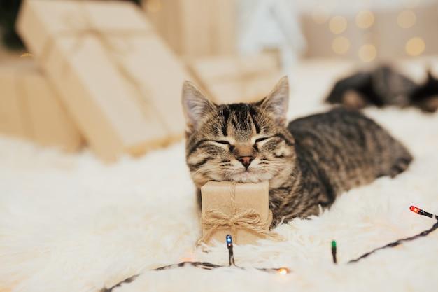 Nettes kätzchen, das auf kleiner geschenkbox schläft.