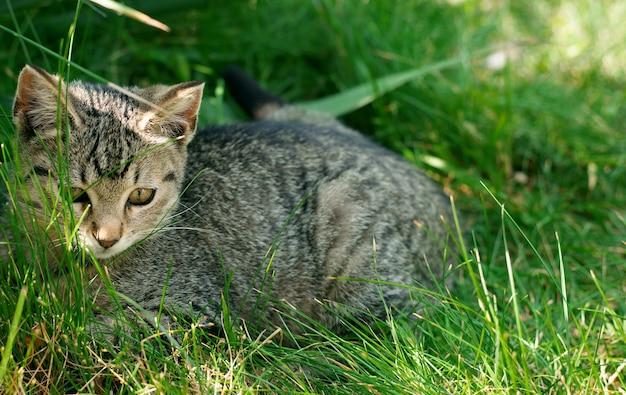 Nettes kätzchen, das im grünen gras sitzt