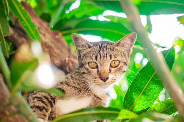 Nettes kätzchen der getigerten katze, das auf baum sich entspannt.