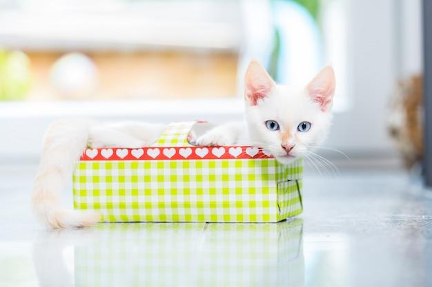 Nettes kätzchen im feiertagskasten