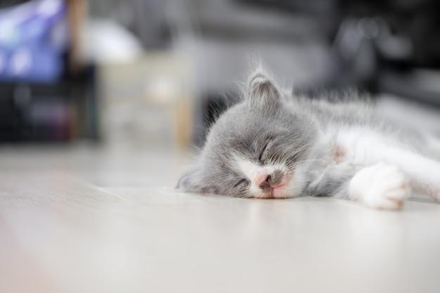Nettes kätzchen mit grauem und weißem fell schläft auf dem boden